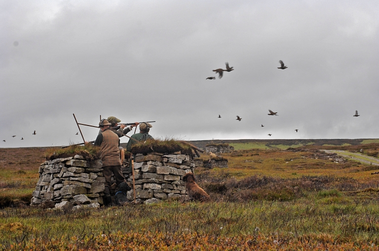 grouse-shooting